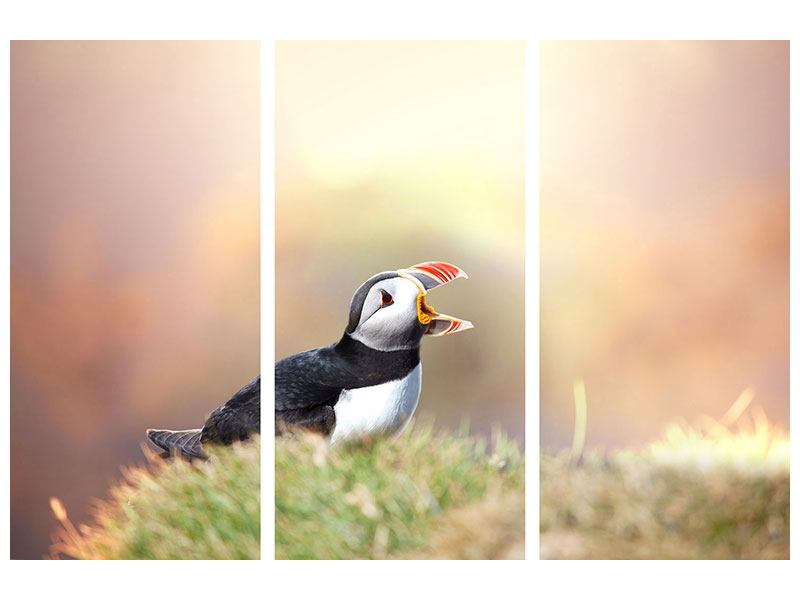 3 Piece Poster The Puffin