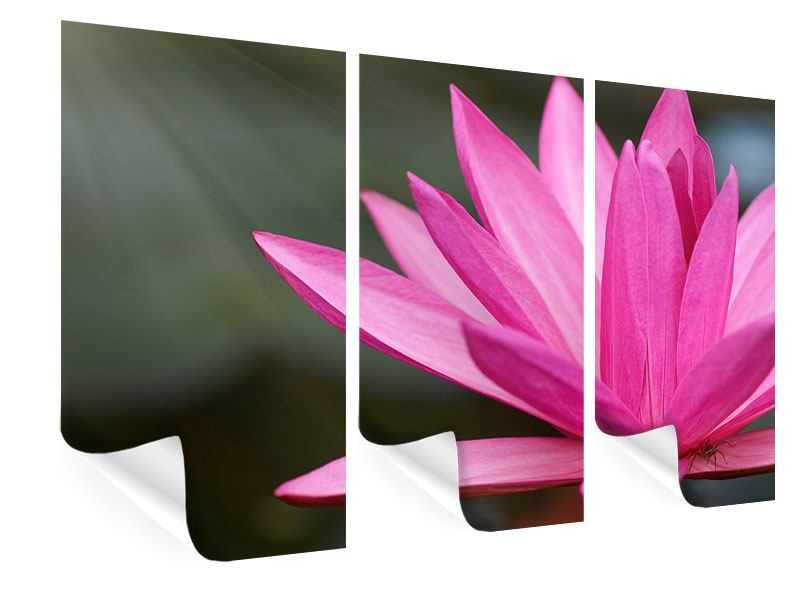 3 Piece Poster XXL Lily In Pink