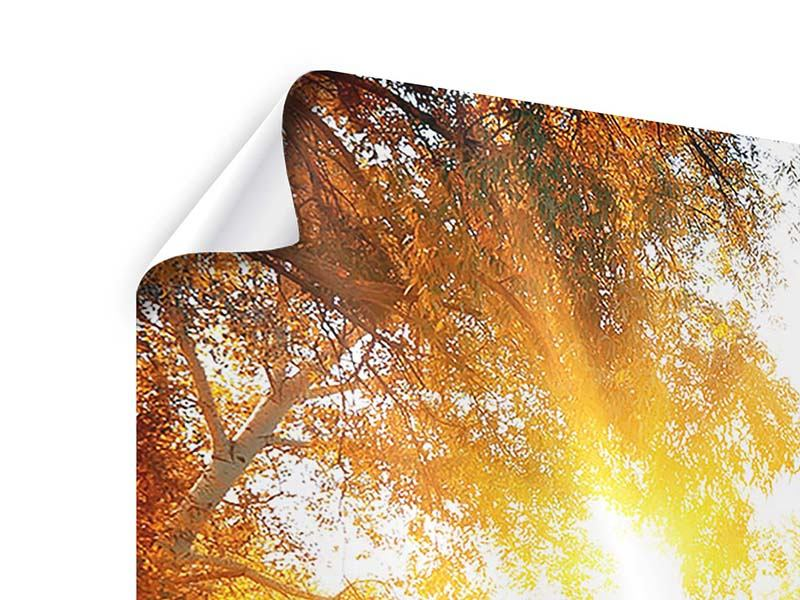 Panoramic 3 Piece Poster Forest Reflection In Water
