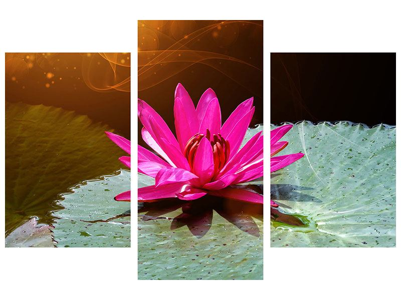 Modern 3 Piece Poster The Frog And The Lily Pad