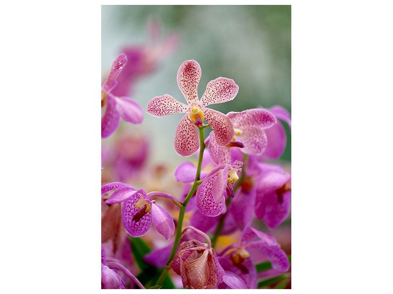 Poster Orchid Dots
