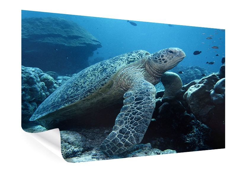 Poster The Sea Turtle