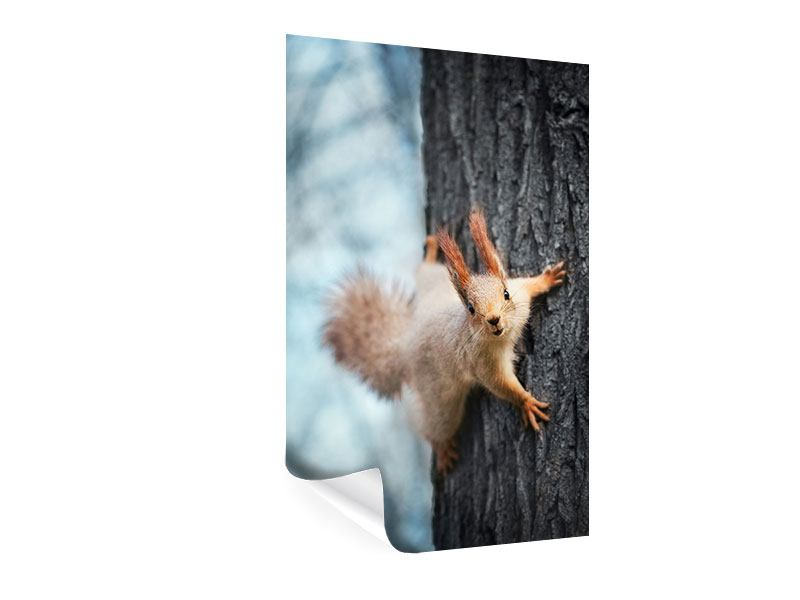 Poster The Squirrel