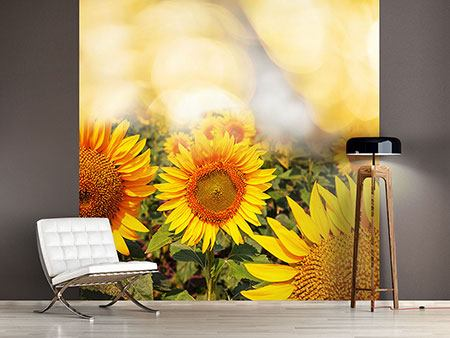 Photo Wallpaper The Light Of Sunflowers
