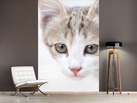 Photo Wallpaper Sweet Kitten