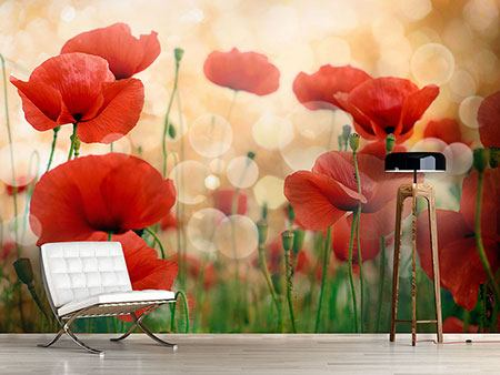 Photo Wallpaper The Poppy