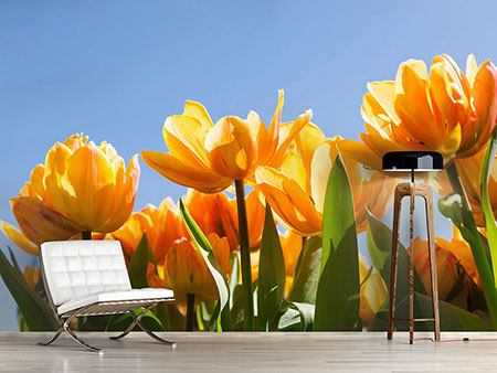 Photo Wallpaper Fabulous Tulips