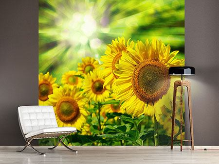 Photo Wallpaper The Sun And The Flowers