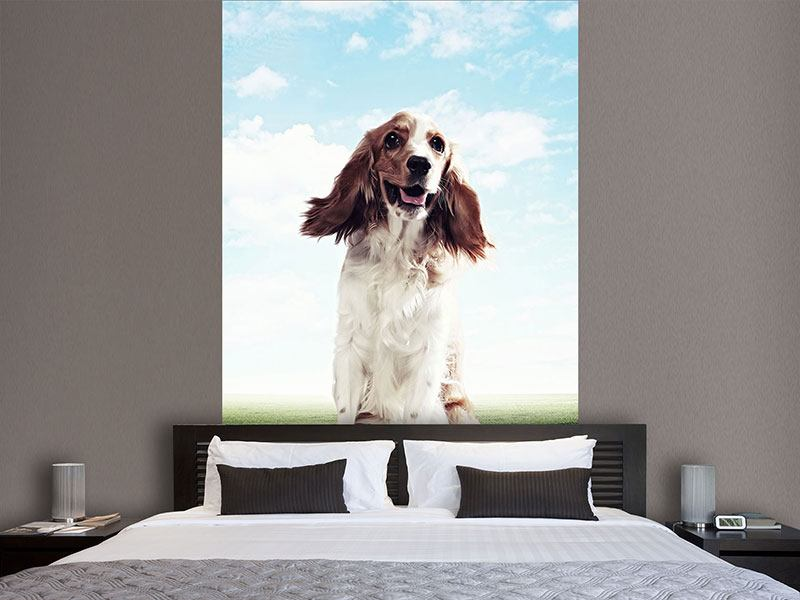Photo Wallpaper Funny Dog