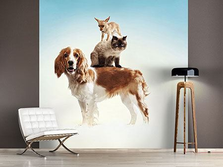 Photo Wallpaper Animal Stack